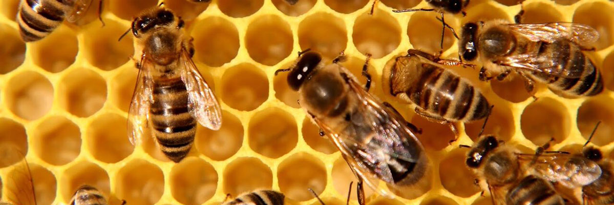 close up of bee hive