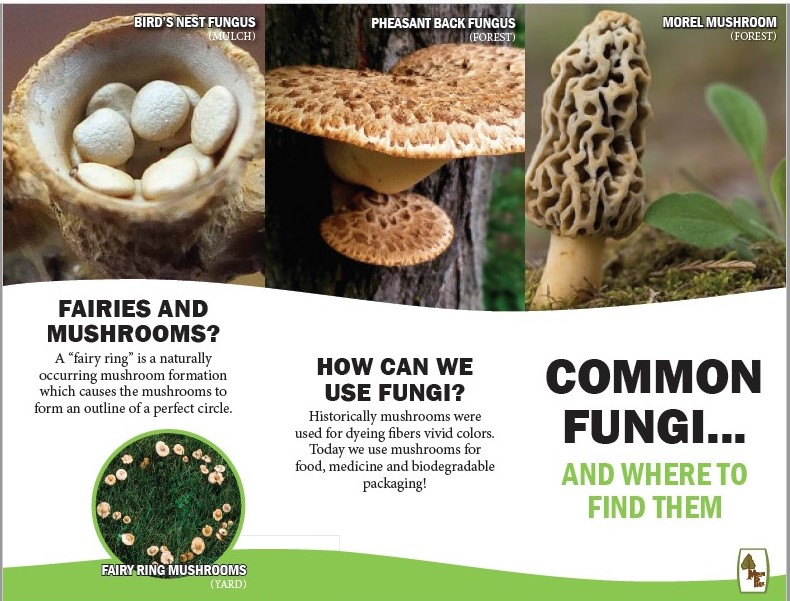 Fungus Field Guide