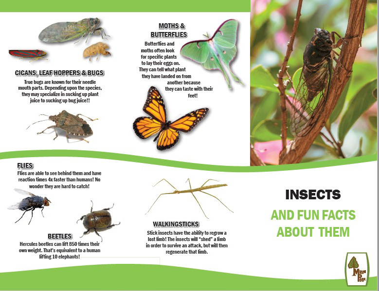 Insect Field Guide
