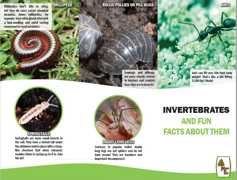Invertebrate Field Guide